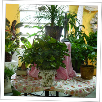 Lush Plants from Bright and Beautiful Flowers in Myrtle Beach