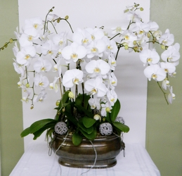 Fabulous Orchids from local Myrtle Beach florist, Bright & Beautiful Flowers