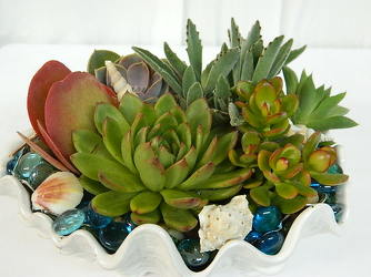 Seaside Succulents from local Myrtle Beach florist, Bright & Beautiful Flowers